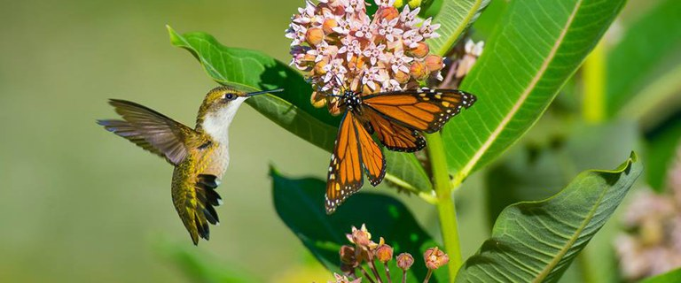 image of hummingbird and butterfly