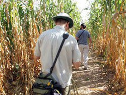 Maize Maze Path