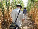Maize Maze Path