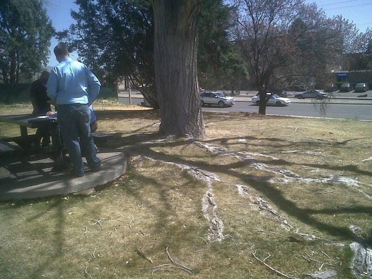 EdLeslieTrees