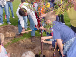 A memorial tree can be a living remembrance of a loved one or a celebration of a happy event.