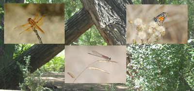 image of trees and insects in the Bosque