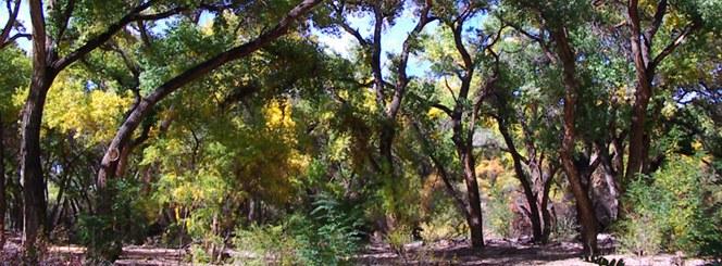 Rio Bravo Riverside Picnic Area