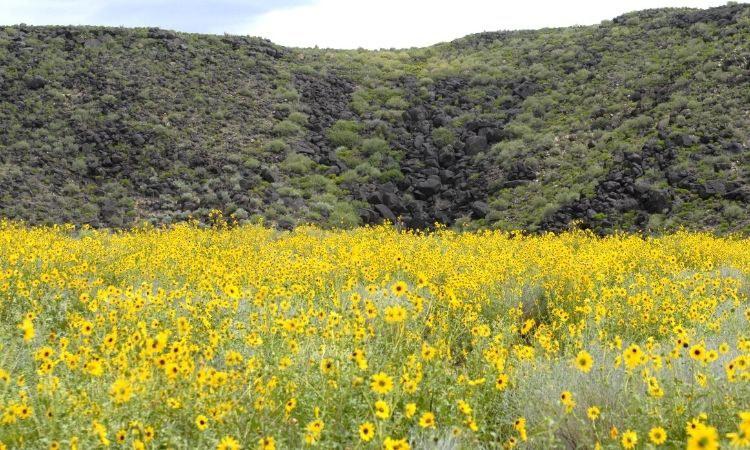 Trails  Boca Negra Canyon