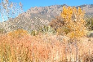 Trails Trail 365