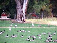 Albuquerque Welcomes Return of Migrating Sandhill Cranes to Open Space