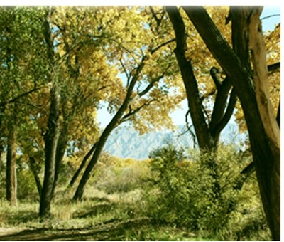 Bosque Wild: Guided Nature Hike