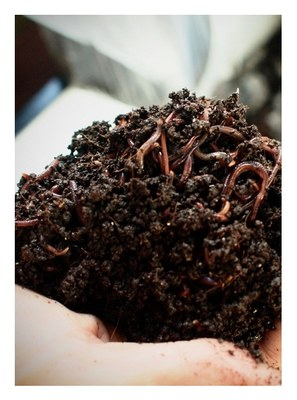Introduction to Composting with Worms