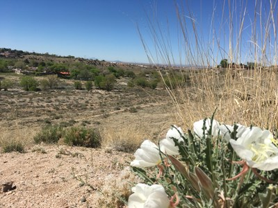 Tijeras Arroyo Signage Plan Public Input Session