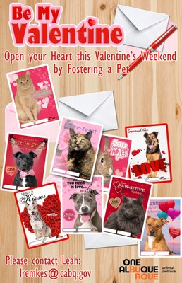 Open Your Heart this Valentines Weekend by Fostering a Pet