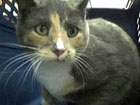 Callie the cat in the shelter