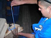 Alamogordo Dogs1