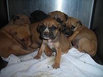 Alamogordo Dogs3