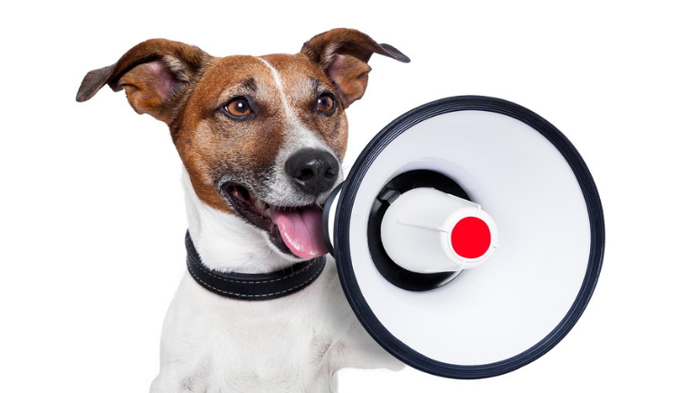 A happy dog with a megaphone
