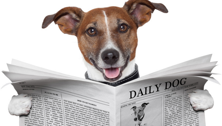 One funny dog reading a newspaper
