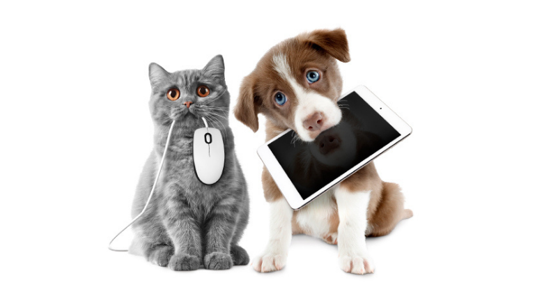A cat with a computer mouse in its mouth and a dog with a tablet in its mouth