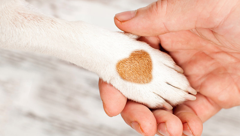 A human hand holding a dog paw