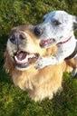 Mutt Shots Best Friends 1