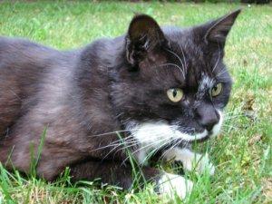 Cat - black and white