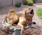 Dog in a bird bath