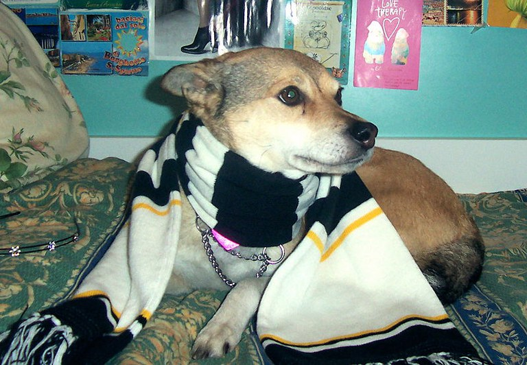 Dog with scarf