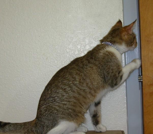 Cat opening door