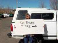 Pit bulls for sale