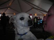 Holiday Adoptathon 2010