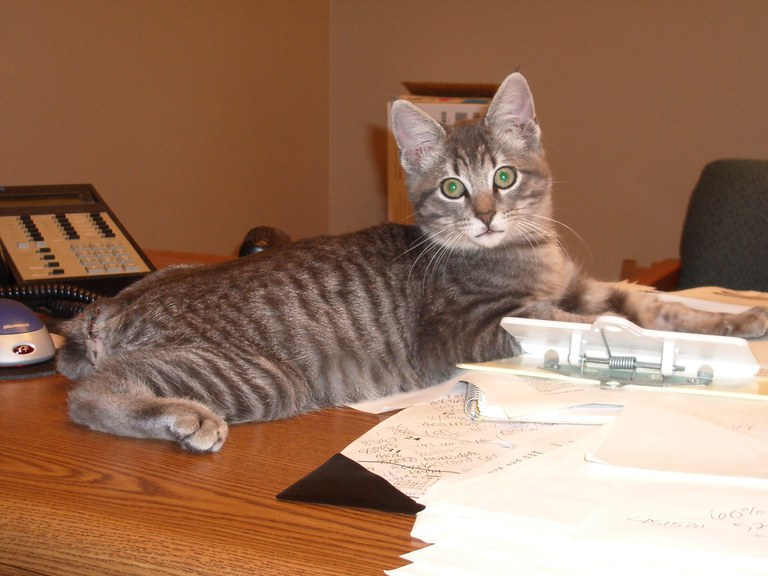 Cat and paperwork