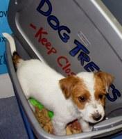 Dog in treat box