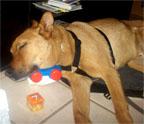 Samson snoozing
