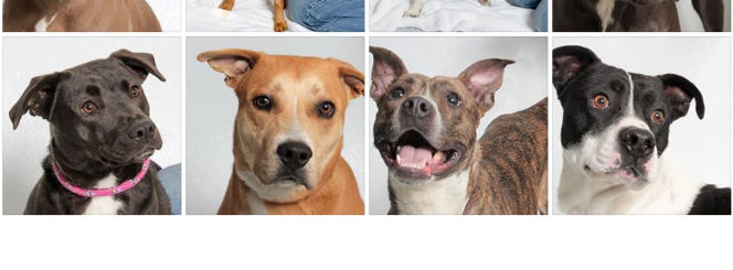 theme of the day pet adoption centers near me