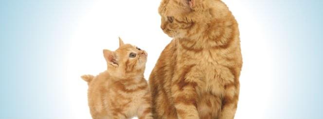 Babysitter Cat