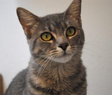 Cat - Spay Neuter