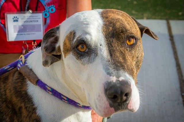 Image of an animal shelter dog.