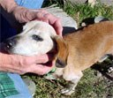 Tuki gets an ear scratch