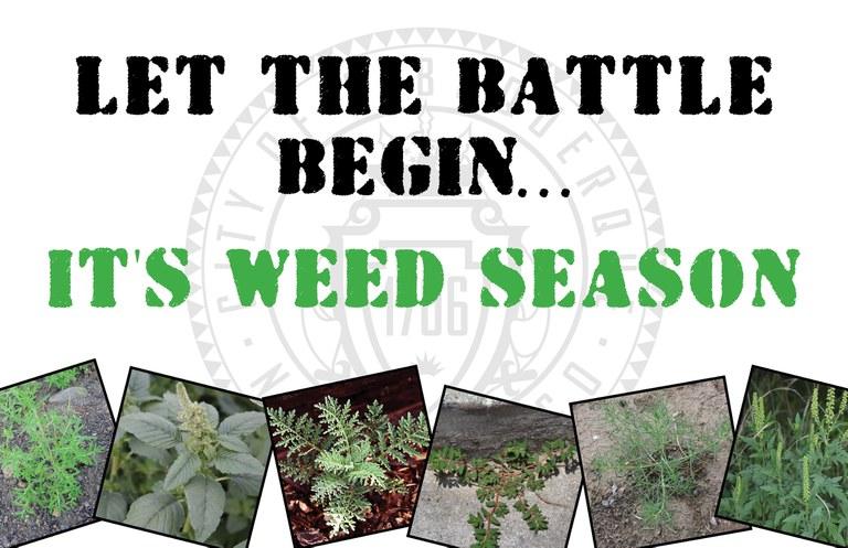 Weed Season Reminder Postcard