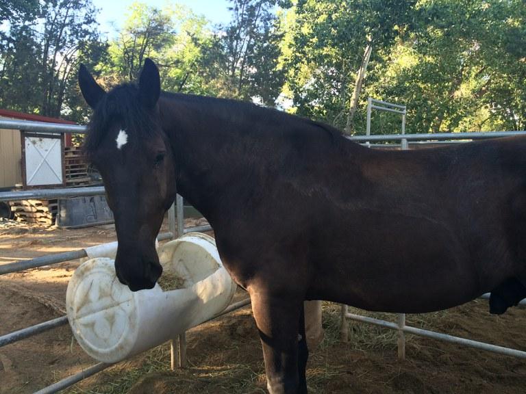 Name the Horse - Horse 1