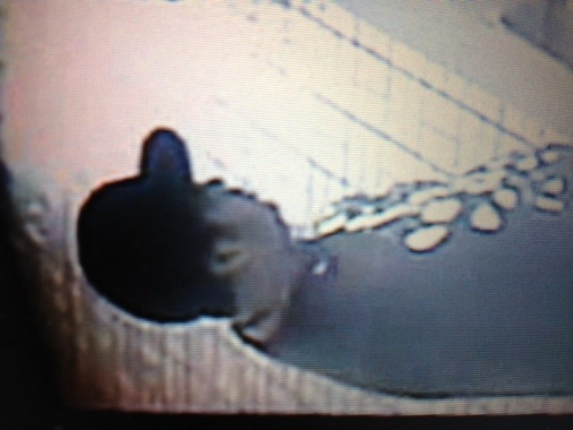 October 2012 Serial Robber 3