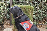 APD and PNM introduce new comfort dog Graham
