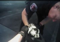 Caught on Camera: APD Officers Save Choking Puppy