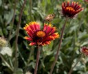 Wildflower Project Supports Local Bee Population and Helps with Weed Control on City Medians
