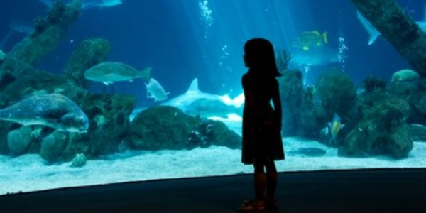 A girl looking at the shark tank.