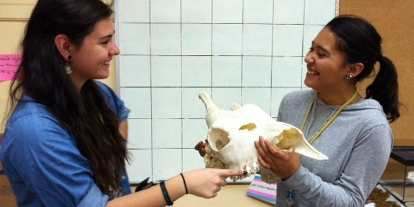 ABQ BioPark Student Volunteers look at a mammal skull.