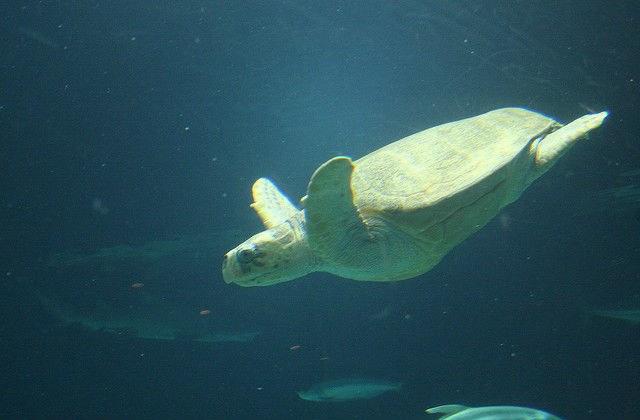 template-sea-turtle